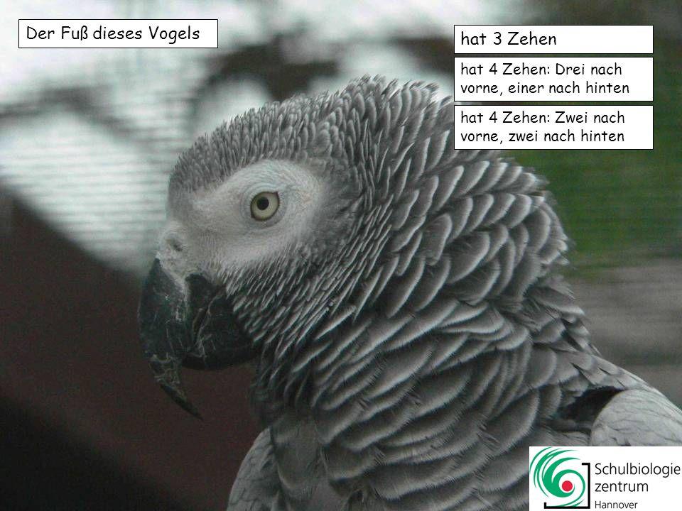 Der Vogel brütet wie alle Kraniche in einem Jahr 1 bis 2 Küken aus 2 bis 5 Küken aus 4 bis 8 Küken aus