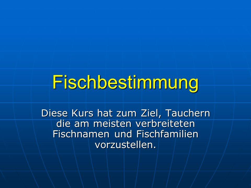 Skorpionfische Pfauenaugen – Zwergrotfeuerfisch (Dendrochirus biocellatus) - Größe: ca.