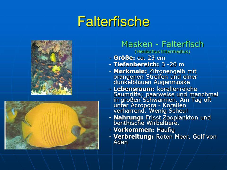 Falterfische Masken - Falterfisch (Heniochus Intermedius) - Größe: ca. 23 cm - Größe: ca. 23 cm - Tiefenbereich: 3 -20 m - Tiefenbereich: 3 -20 m - Me