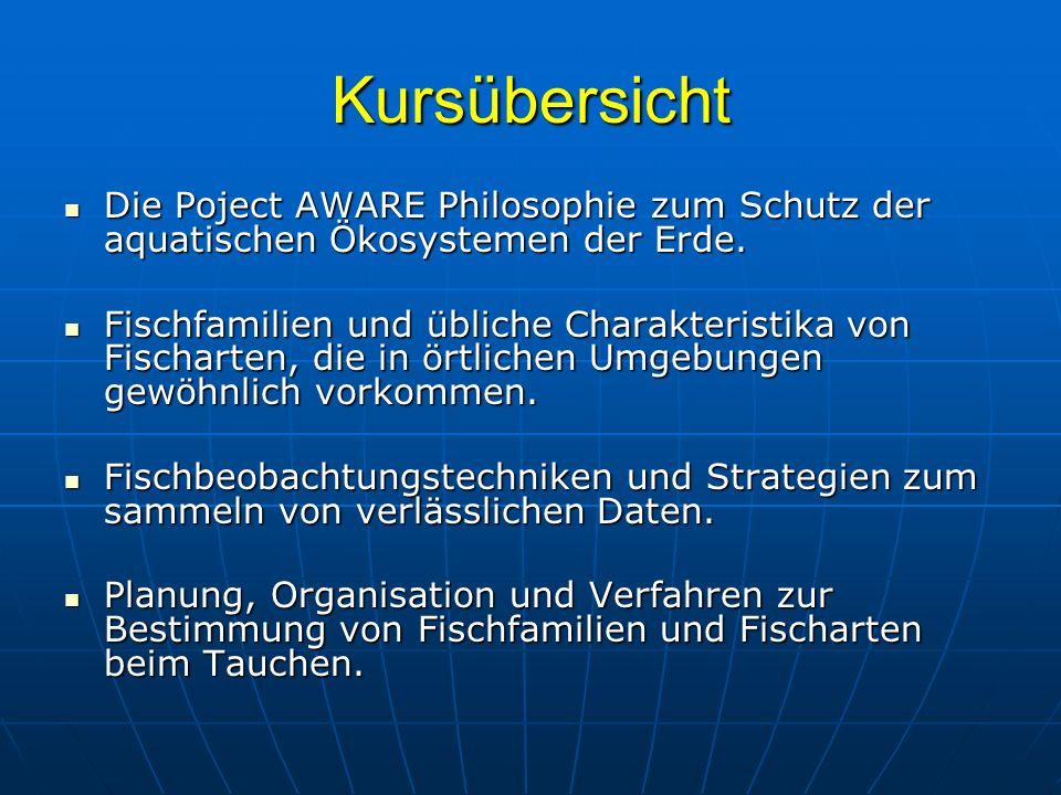 Drückerfische und Feilenfische Schrift - Feilenfisch (Aluteres scriptus) - Größe: ca.