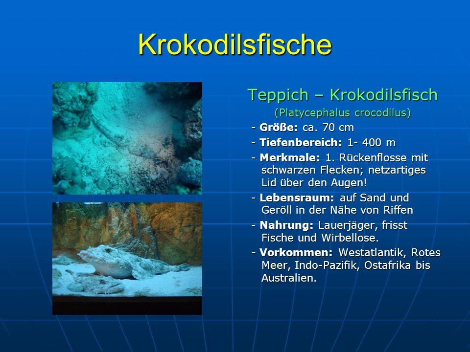 Krokodilsfische Teppich – Krokodilsfisch (Platycephalus crocodilus) - Größe: ca. 70 cm - Größe: ca. 70 cm - Tiefenbereich: 1- 400 m - Tiefenbereich: 1