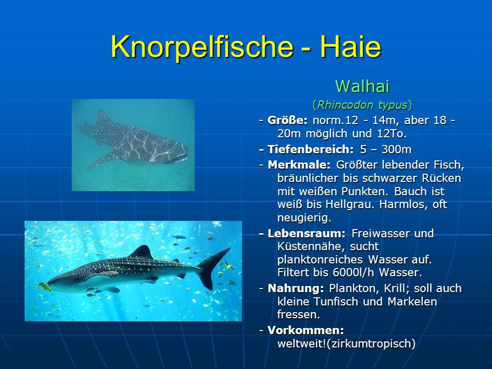 Knorpelfische - Haie Walhai (Rhincodon typus) - Größe: norm.12 - 14m, aber 18 - 20m möglich und 12To. - Tiefenbereich: 5 – 300m - Merkmale: Größter le