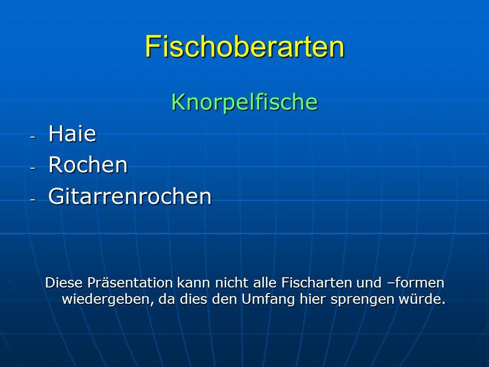 Fischoberarten Knorpelfische - Haie - Rochen - Gitarrenrochen Diese Präsentation kann nicht alle Fischarten und –formen wiedergeben, da dies den Umfan