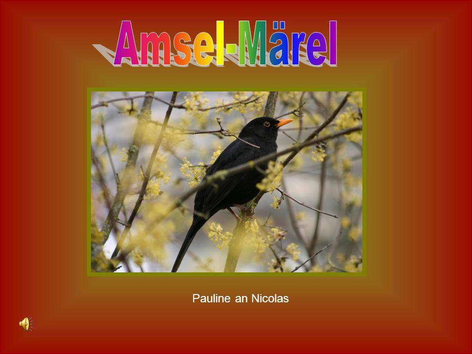 Größe: Der Vogel ist 22 cm groß.