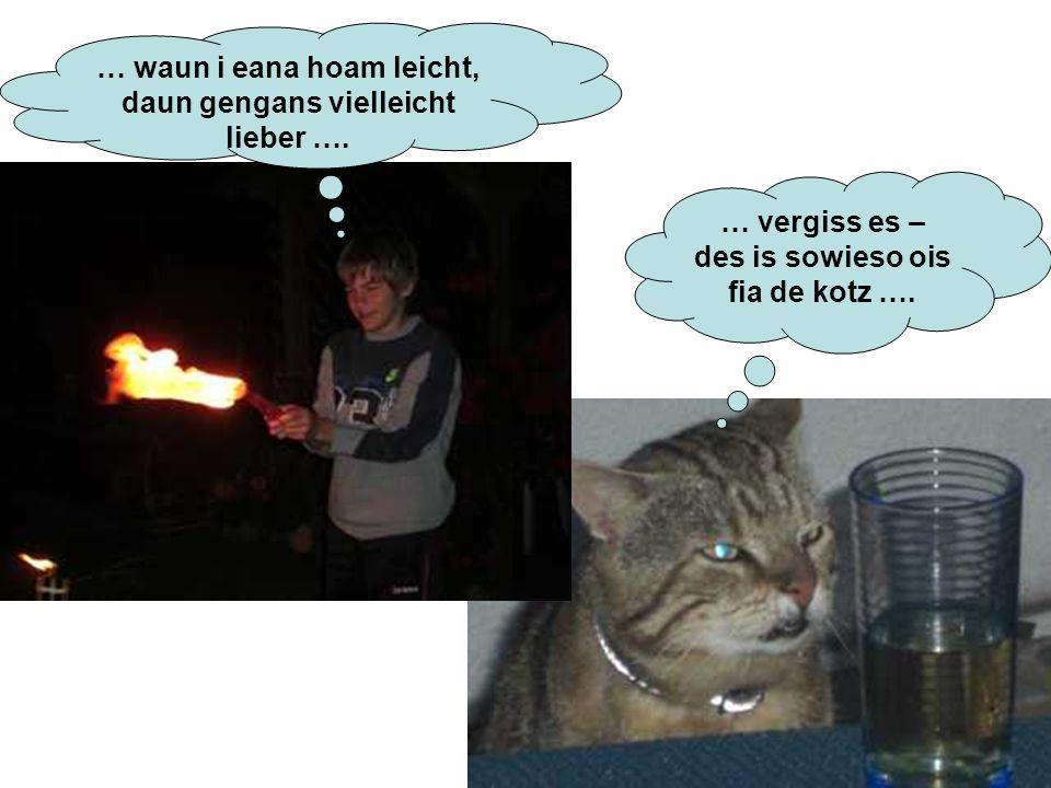 … waun i eana hoam leicht, daun gengans vielleicht lieber …. … vergiss es – des is sowieso ois fia de kotz ….