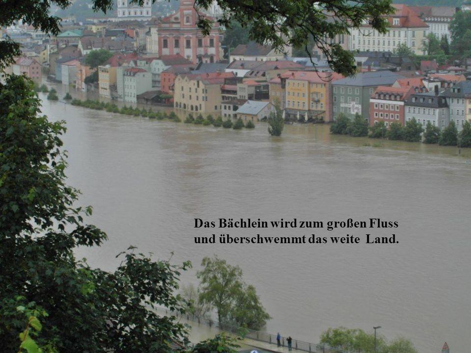 Der Regen rauscht in dicken Bollen und Menschen, Tiere fliehen schnell.