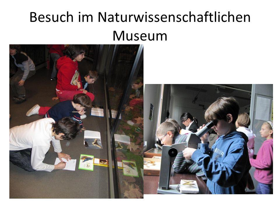 Besuch im Naturwissenschaftlichen Museum