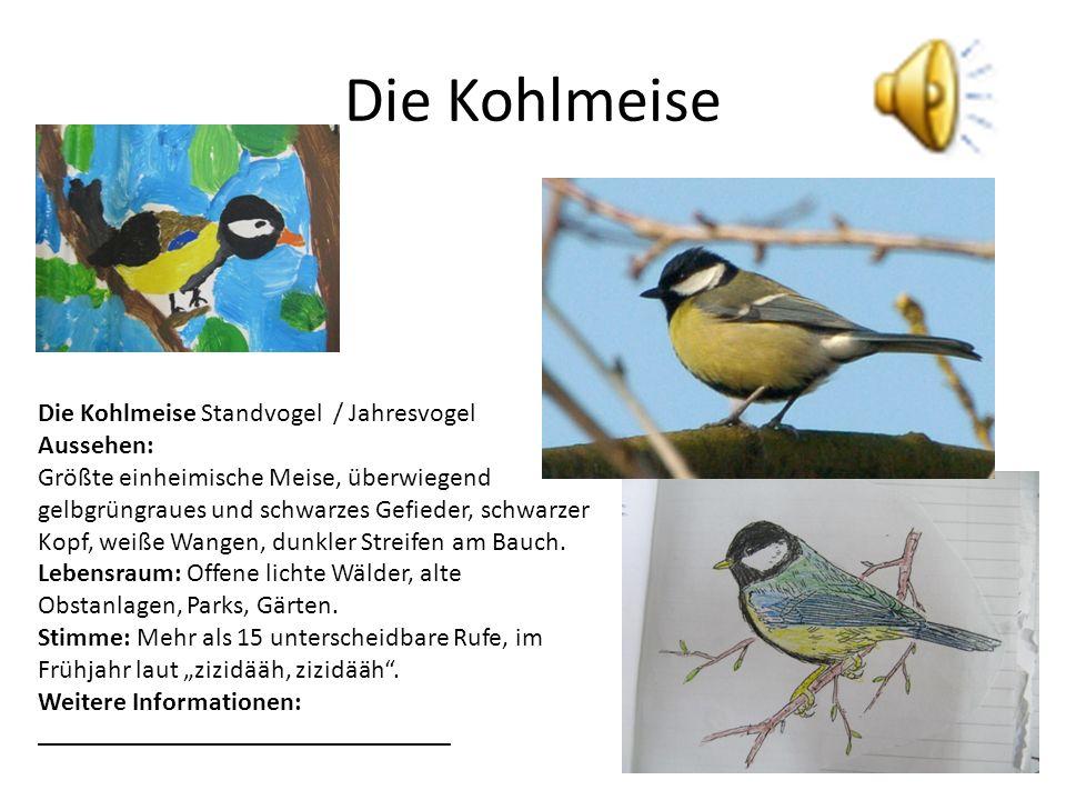 Die Kohlmeise Die Kohlmeise Standvogel / Jahresvogel Aussehen: Größte einheimische Meise, überwiegend gelbgrüngraues und schwarzes Gefieder, schwarzer