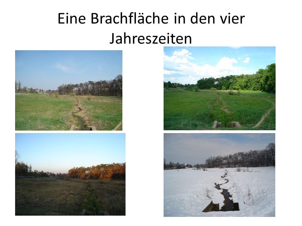 Eine Brachfläche in den vier Jahreszeiten