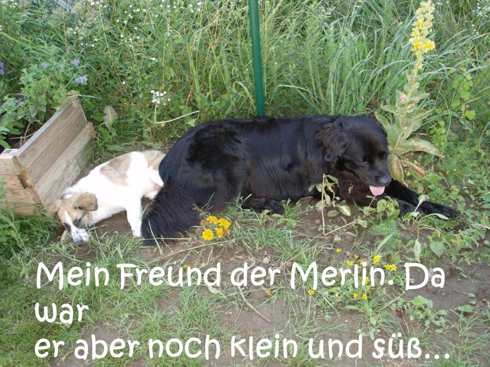 Mein Freund der Merlin. Da war er aber noch klein und süß…