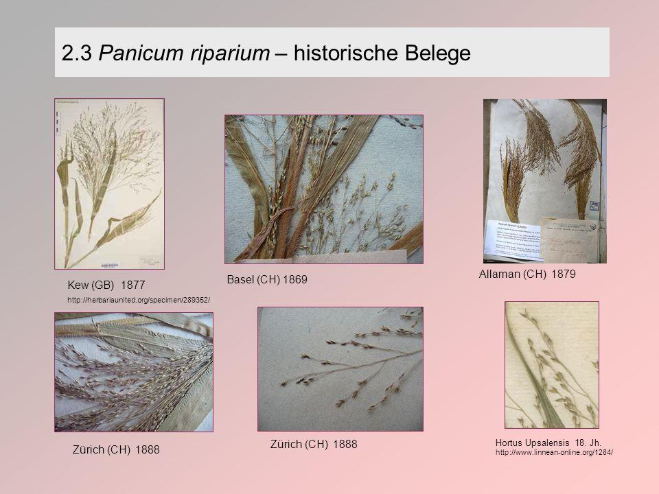 2.3 Panicum riparium – historische Belege Allaman (CH) 1879 Basel (CH) 1869 Zürich (CH) 1888 Kew (GB) 1877 http://herbariaunited.org/specimen/289352/ Hortus Upsalensis 18.