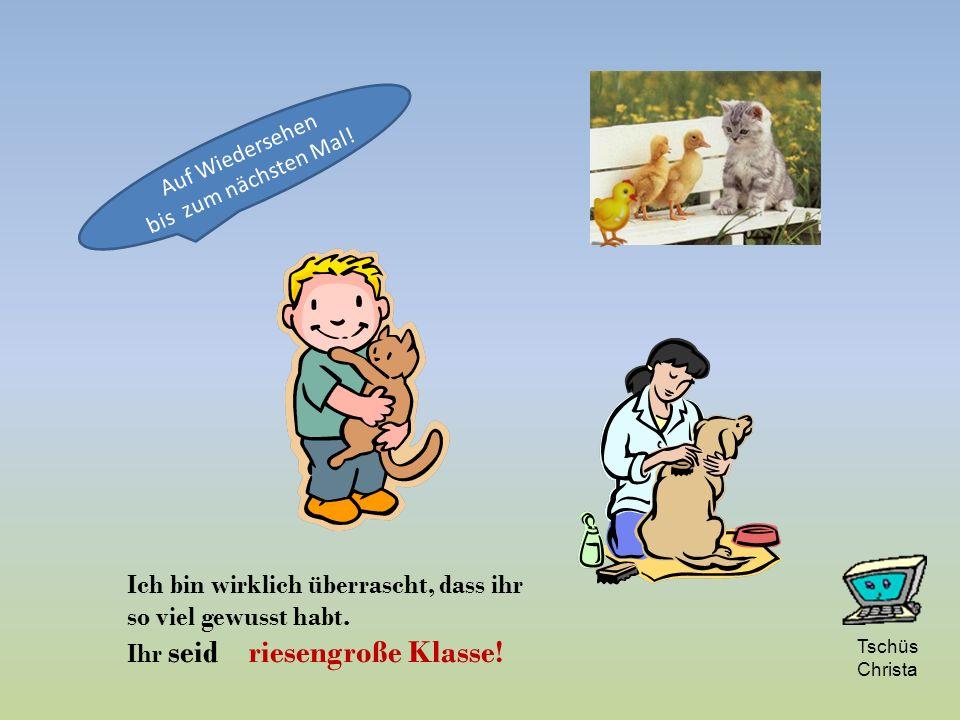 Erpel Enterich Ente Enten-Küken Der Name der Frau und des Kindes ist einfach. Wie sieht es mit dem Mann aus?