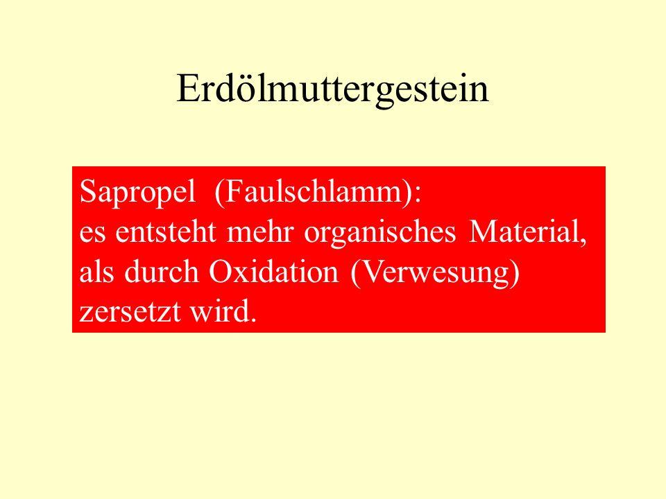 Erdölmuttergestein Sapropel (Faulschlamm): es entsteht mehr organisches Material, als durch Oxidation (Verwesung) zersetzt wird.