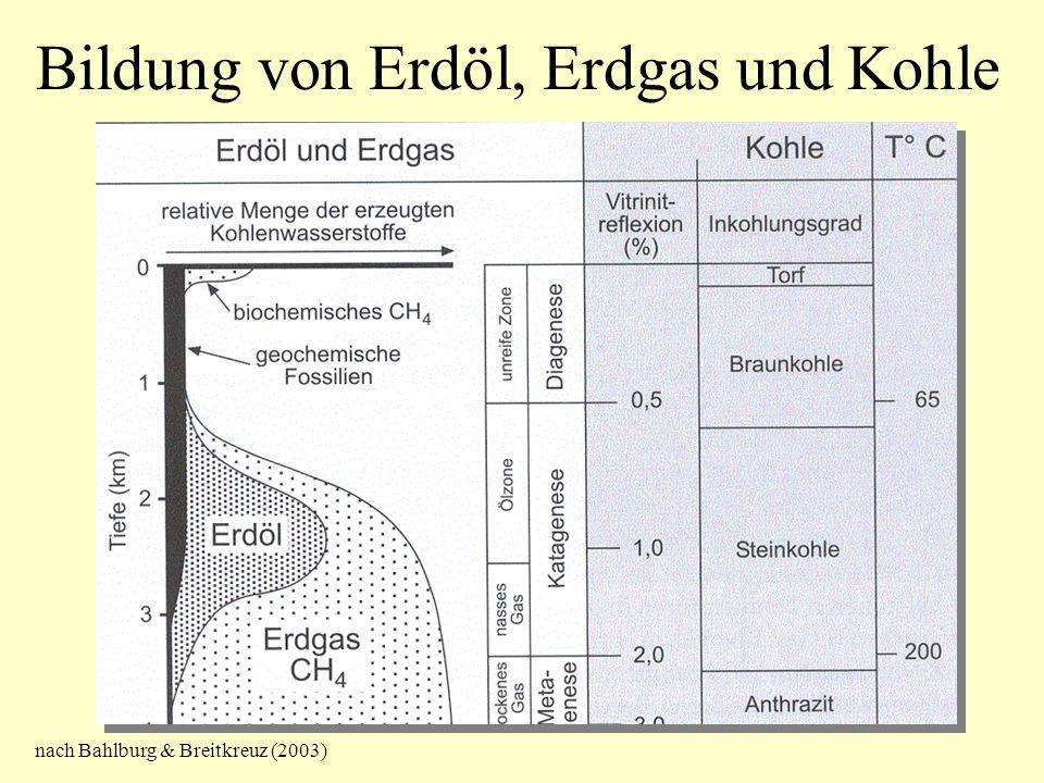 Bildung von Erdöl, Erdgas und Kohle nach Bahlburg & Breitkreuz (2003)