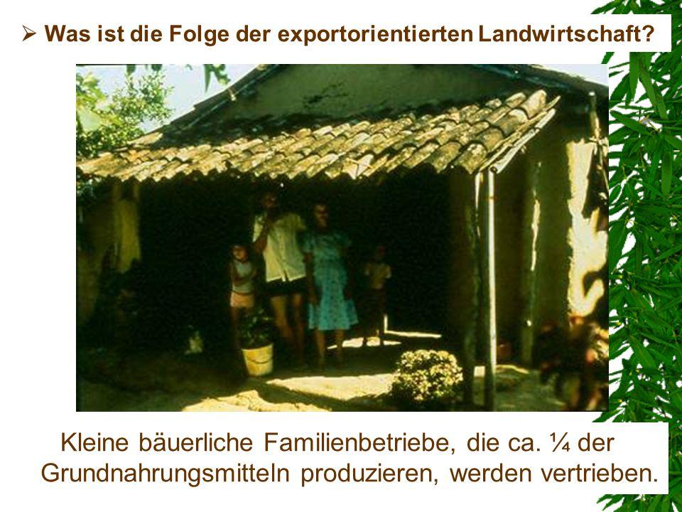 Kleine bäuerliche Familienbetriebe, die ca. ¼ der Grundnahrungsmitteln produzieren, werden vertrieben. Was ist die Folge der exportorientierten Landwi
