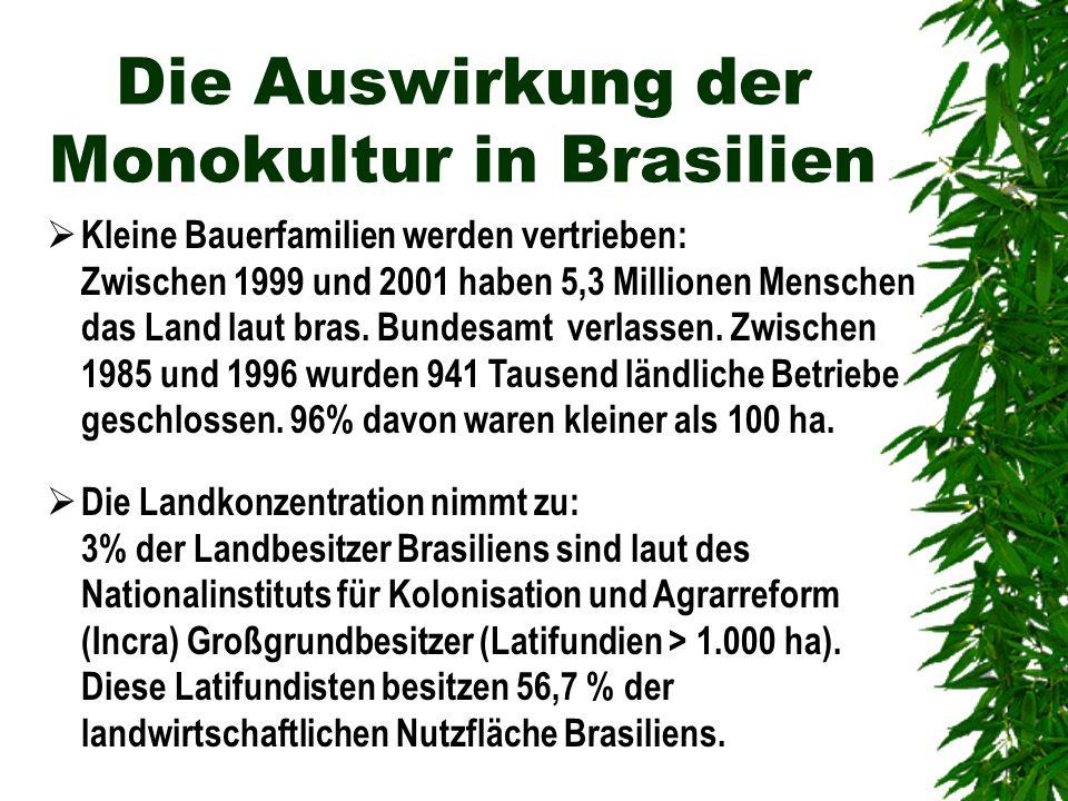 Die Auswirkung der Monokultur in Brasilien Kleine Bauerfamilien werden vertrieben: Zwischen 1999 und 2001 haben 5,3 Millionen Menschen das Land laut b