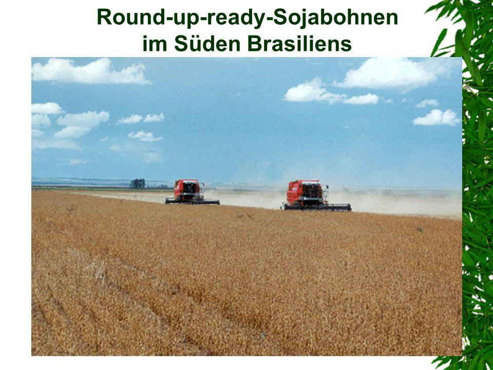 Round-up-ready-Sojabohnen im Süden Brasiliens