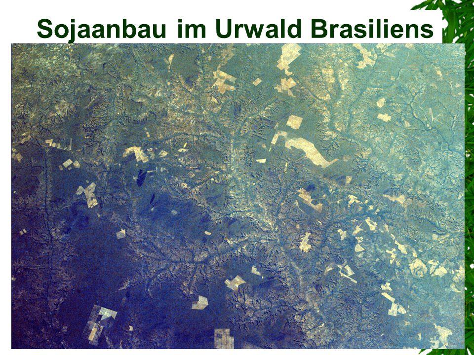 Sojaanbau im Urwald Brasiliens