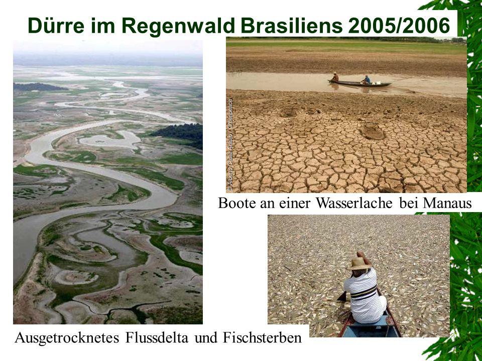 Dürre im Regenwald Brasiliens 2005/2006 Boote an einer Wasserlache bei Manaus Ausgetrocknetes Flussdelta und Fischsterben