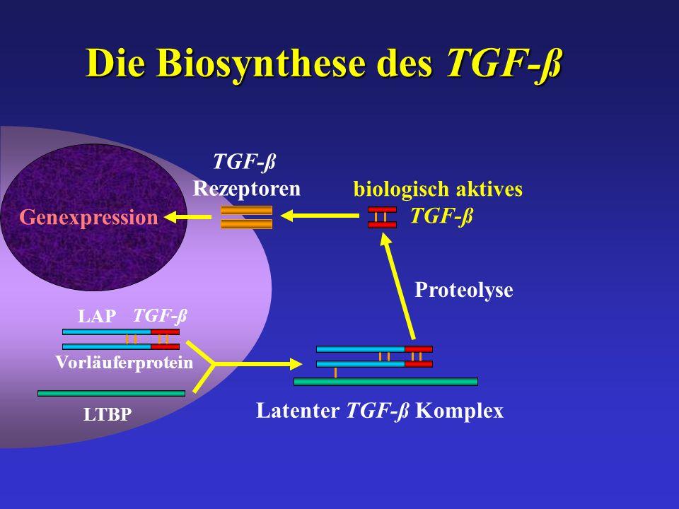 Die Biosynthese des TGF-ß LTBP Latenter TGF-ß Komplex Proteolyse biologisch aktives TGF-ß Rezeptoren Vorläuferprotein LAP TGF-ß Genexpression
