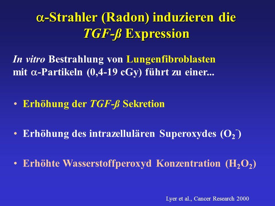 -Strahler (Radon)induzieren die -Strahler (Radon) induzieren die TGF-ß Expression TGF-ß Expression In vitro Bestrahlung von Lungenfibroblasten mit -Partikeln (0,4-19 cGy) führt zu einer...