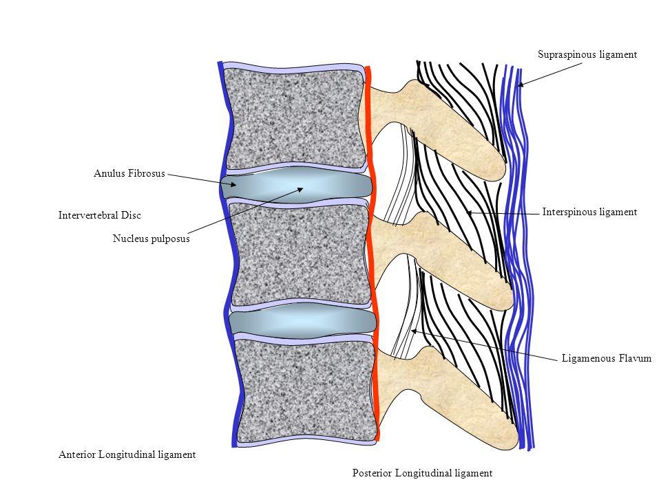 Supraspinous ligament Interspinous ligament Ligamenous Flavum Posterior Longitudinal ligament Anterior Longitudinal ligament Anulus Fibrosus Nucleus p