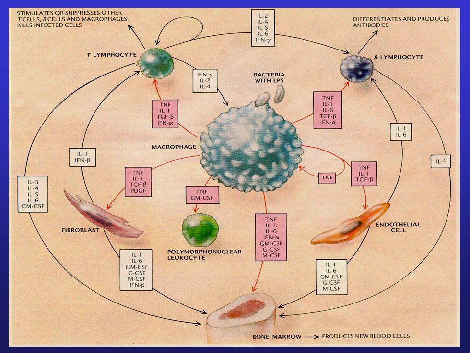 Aktives TGF-ß Hemmung der Entzündungs- reaktion Aktivierung von Heilungs- prozessen Schmerzreduktion & verbesserte Beweglichkeit Synovial Fibroblast Gasteiner Heilstollenkur kurzzeitige Einwirkung von -Partikel Immunzellen