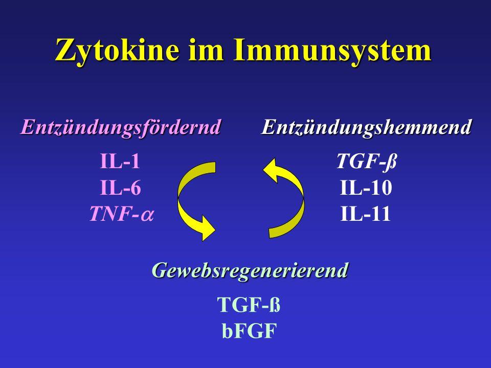 Zytokine im Immunsystem Gewebsregenerierend TGF-ß bFGFEntzündungsfördernd IL-1 IL-6 TNF- Entzündungshemmend TGF-ß IL-10 IL-11