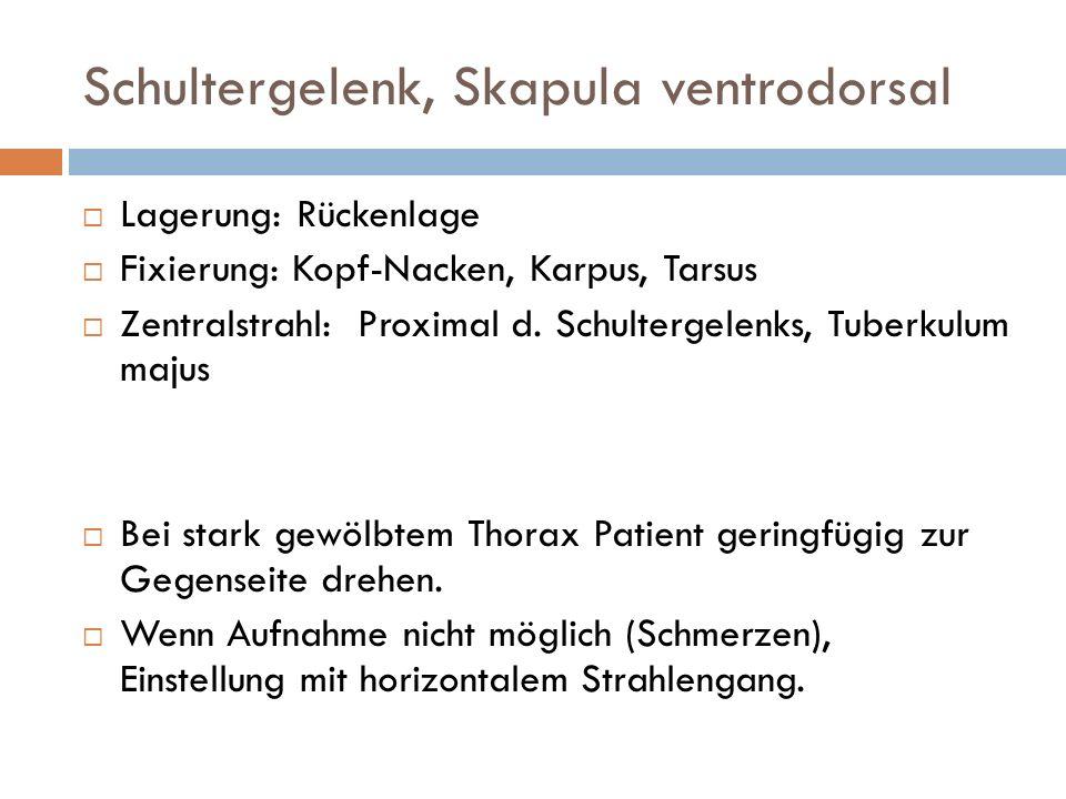 Schultergelenk, Skapula ventrodorsal Lagerung: Rückenlage Fixierung: Kopf-Nacken, Karpus, Tarsus Zentralstrahl: Proximal d. Schultergelenks, Tuberkulu