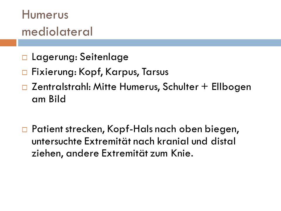Humerus mediolateral Lagerung: Seitenlage Fixierung: Kopf, Karpus, Tarsus Zentralstrahl: Mitte Humerus, Schulter + Ellbogen am Bild Patient strecken,