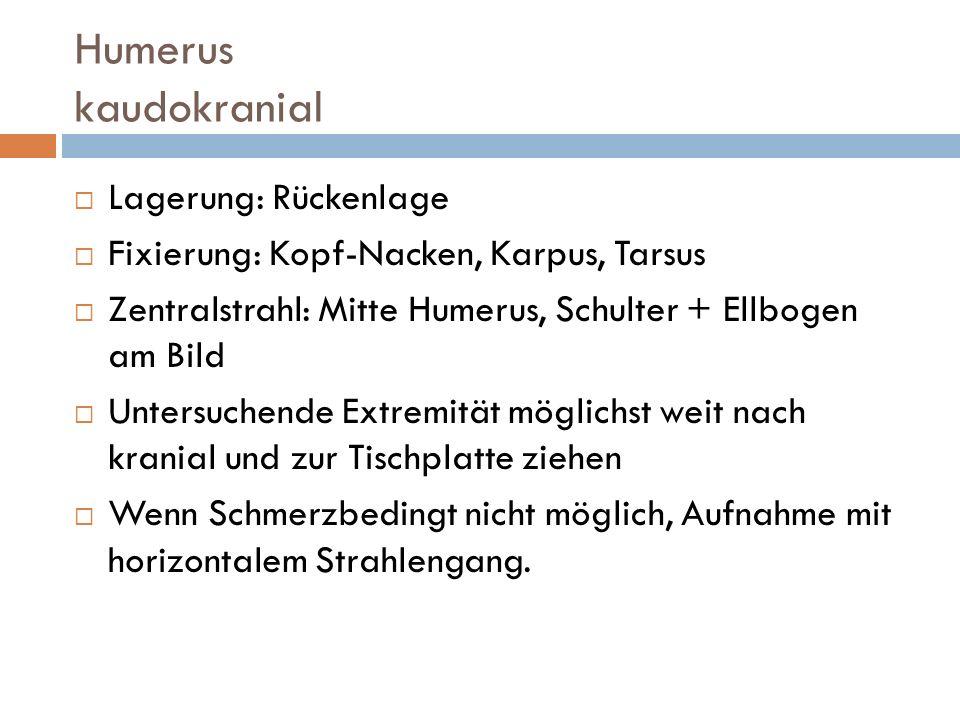 Humerus kaudokranial Lagerung: Rückenlage Fixierung: Kopf-Nacken, Karpus, Tarsus Zentralstrahl: Mitte Humerus, Schulter + Ellbogen am Bild Untersuchen