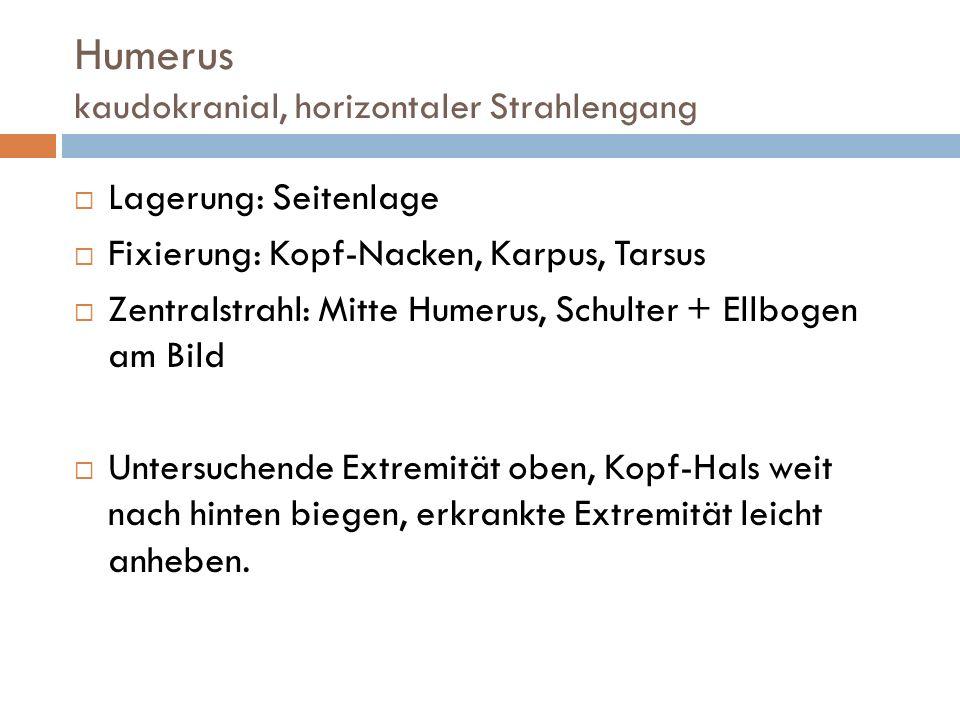 Ellbogengelenk mediolateral Lagerung: Seitenlage Fixierung: Kopf, Karpus, Tarsus Zentralstrahl: distal der Epikondylen Kopf und Hals leicht nach oben biegen.