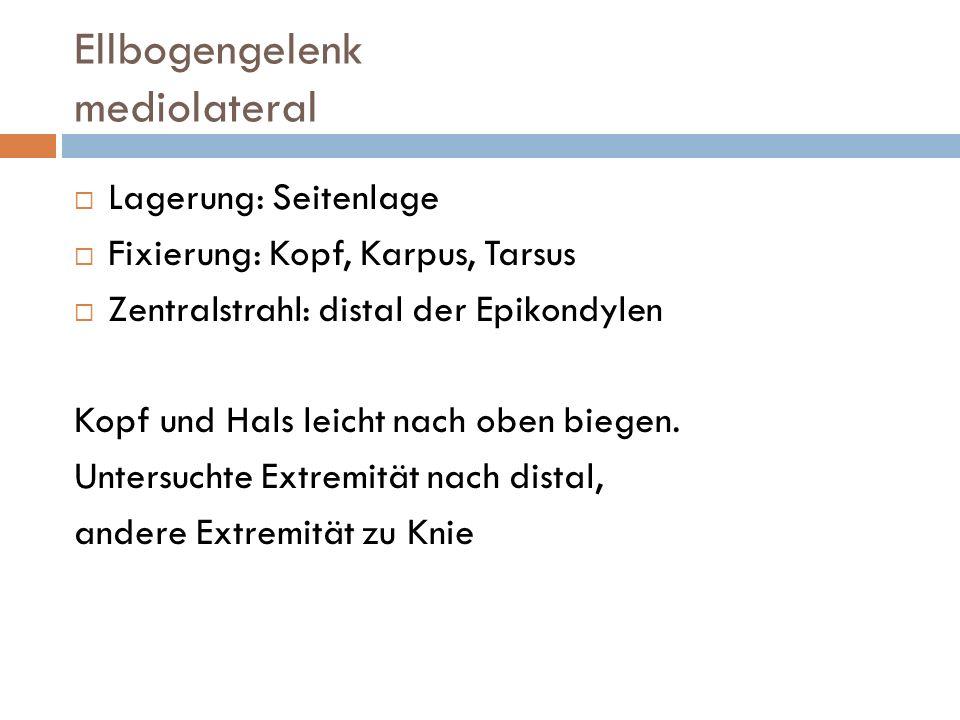 Ellbogengelenk gebeugt, mediolateral Lagerung: Seitenlage Fixierung: Kopf, Karpus, Tarsus Zentralstrahl: kranial des Olekranon Bei Verdacht auf Veränderungendes Proc.