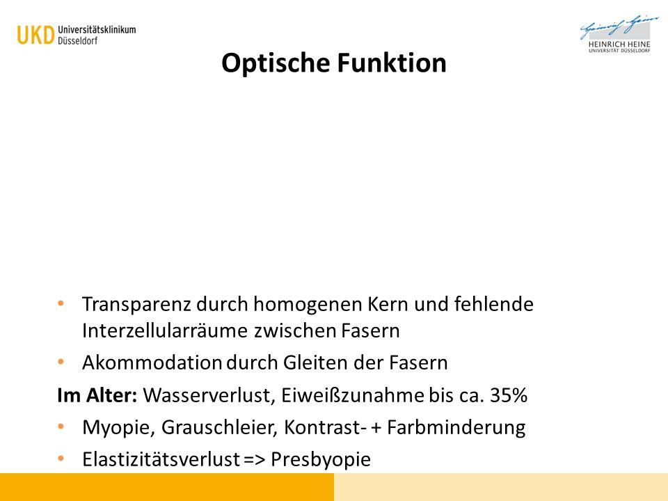 Optische Funktion Transparenz durch homogenen Kern und fehlende Interzellularräume zwischen Fasern Akommodation durch Gleiten der Fasern Im Alter: Was