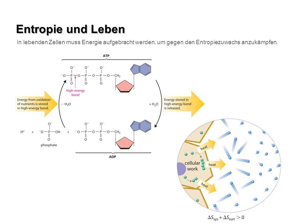 Entropie und Leben In lebenden Zellen muss Energie aufgebracht werden, um gegen den Entropiezuwachs anzukämpfen.