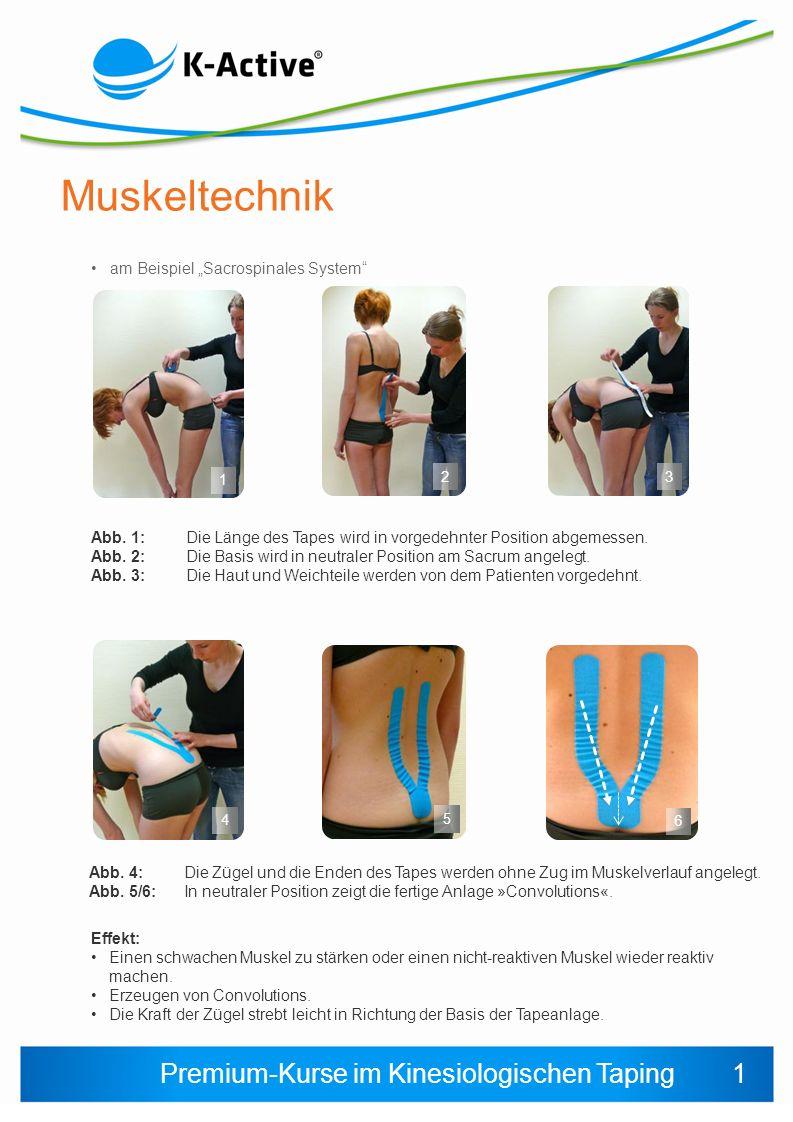 Premium-Kurse im Kinesiologischen Taping Muskeltechnik am Beispiel Sacrospinales System 1 2 Abb. 1: Die Länge des Tapes wird in vorgedehnter Position