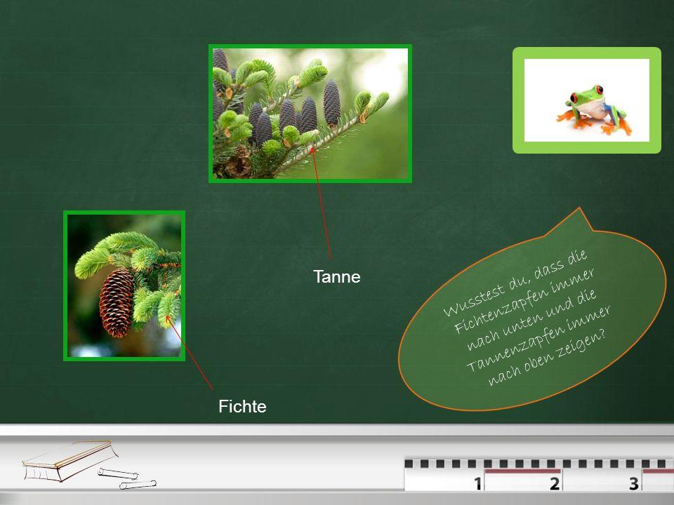 Kriterien der Baumbestimmung Bei den Laubbäumen gibt es fünf Möglichkeiten der Baumbestimmung: nach den Blättern nach den Blüten nach der Rinde nach d