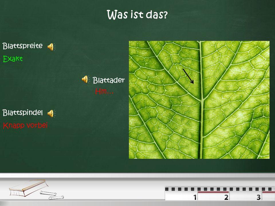 Was sind das für Blätter? Einfach & Wechselständig Einfach & Gegenständig Zusammengesetzt & Gegenständig Zusammengesetzt & Wechselständig Nee! Überleg