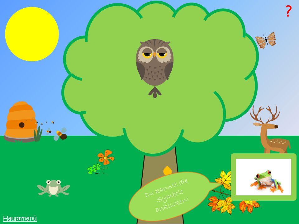 Bei den Nadelbäumen gibt es drei Blattmerkmale: Nadelförmig, die Nadeln sind direkt am Zweig Nadelförmig, die Nadeln sind in Büscheln am Zweig Schupppenförmig, die Blätter sind am Zweig