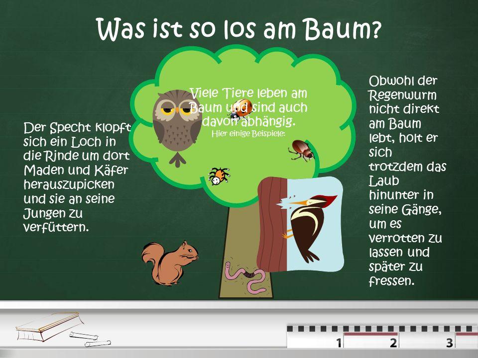 Was ist so los am Baum.Viele Tiere leben am Baum und sind auch davon abhängig.
