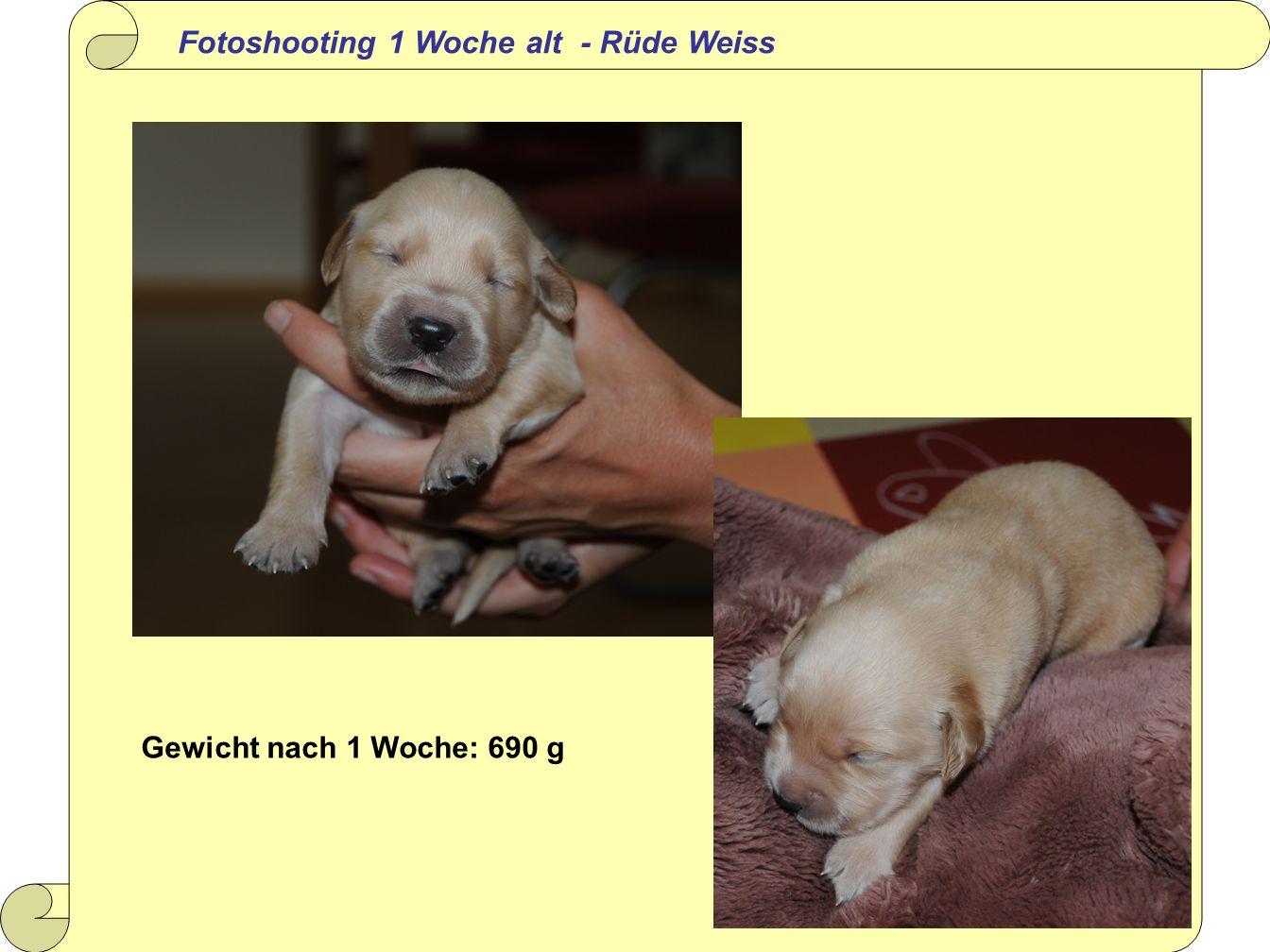 Fotoshooting 1 Woche alt - Rüde Weiss Gewicht nach 1 Woche: 690 g