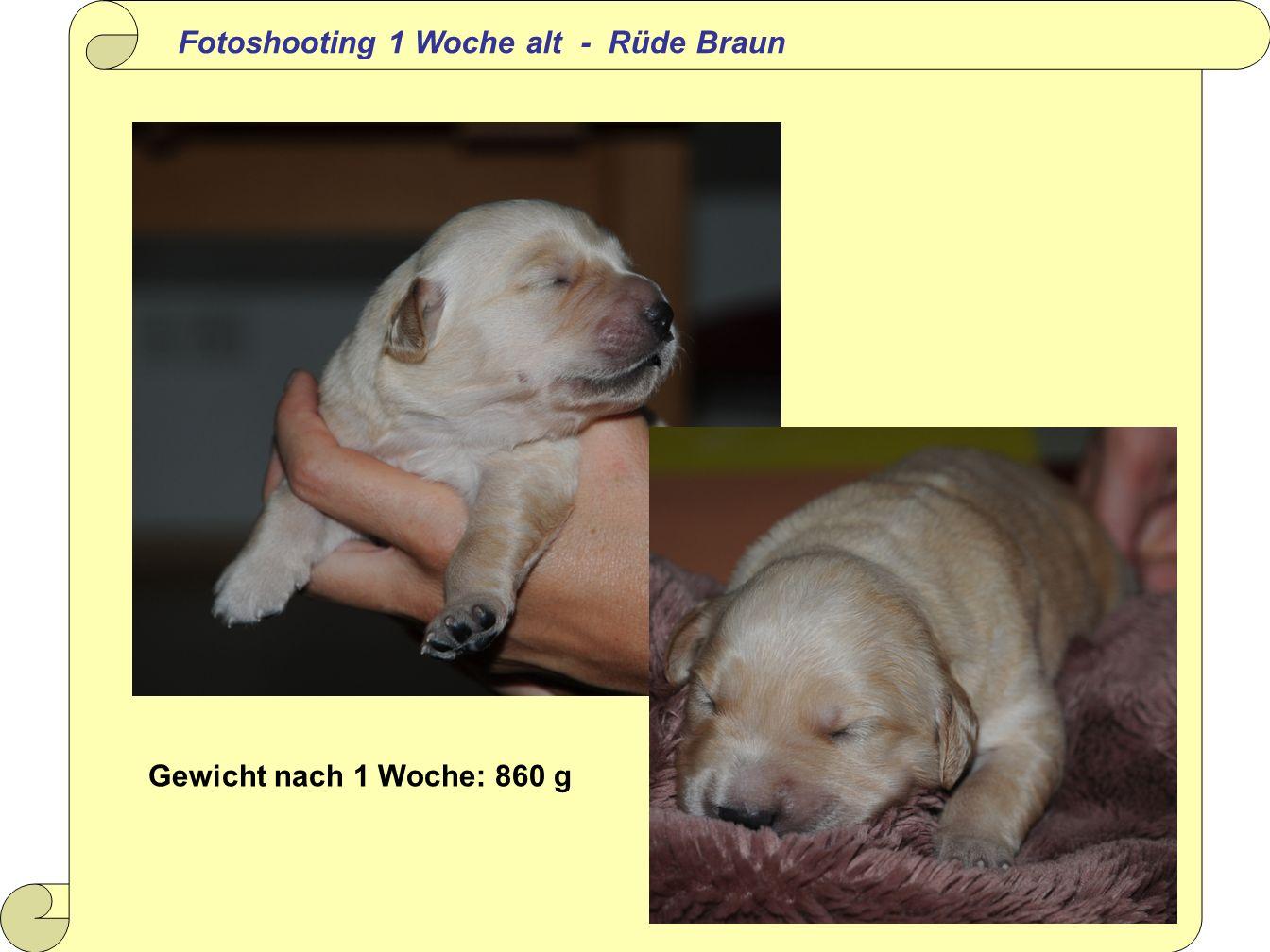 Fotoshooting 1 Woche alt - Rüde Braun Gewicht nach 1 Woche: 860 g