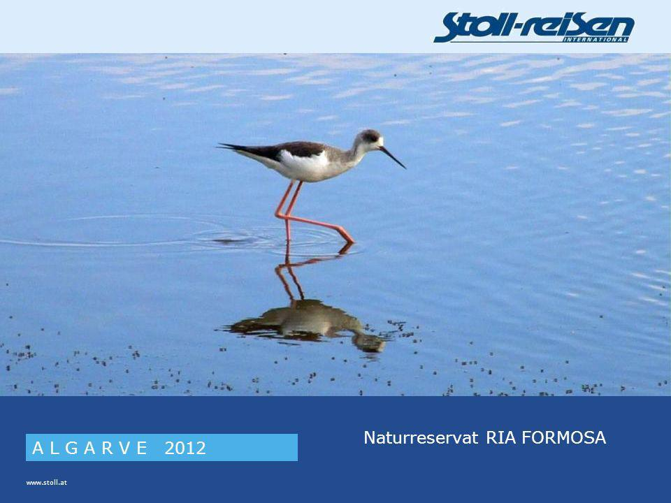 www.stoll.at A L G A R V E 2012 Naturreservat RIA FORMOSA