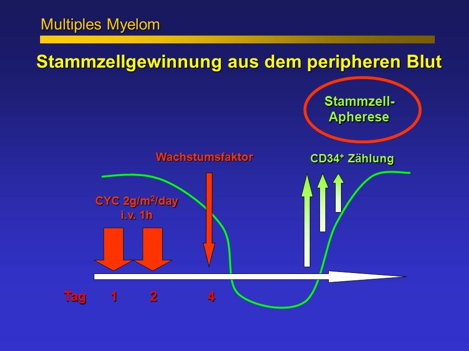 Stammzellgewinnung aus dem peripheren Blut Wachstumsfaktor Tag1 2 4 CYC 2g/m 2 /day i.v. 1h CD34 + Zählung Stammzell- Apherese Multiples Myelom