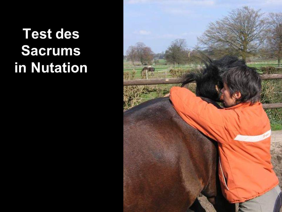 Test des Sacrums in Nutation