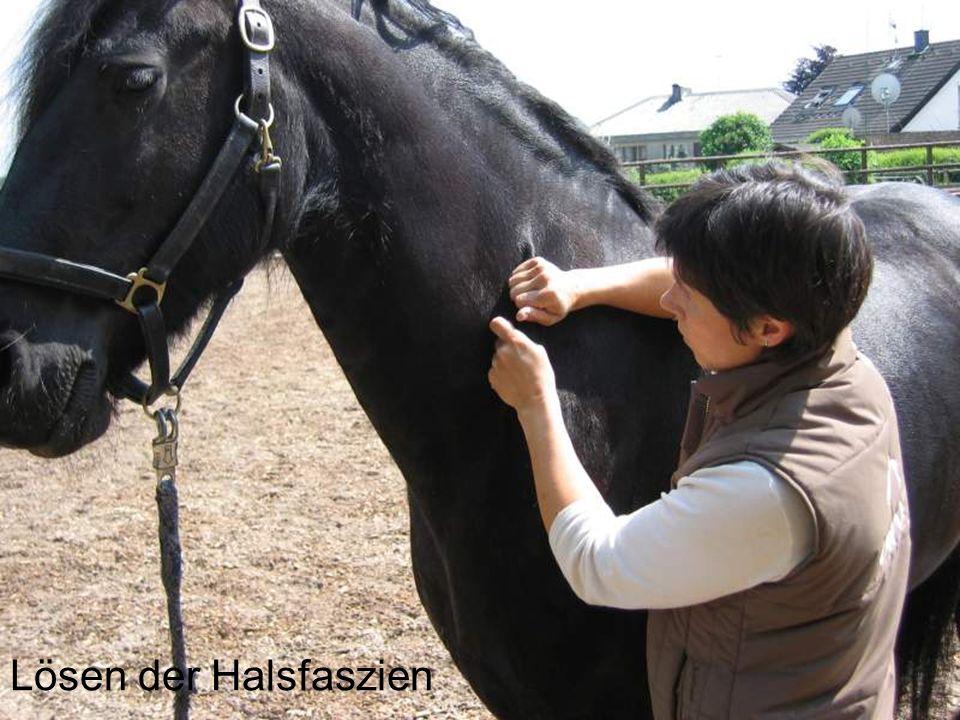 Lösen der Halsfaszien