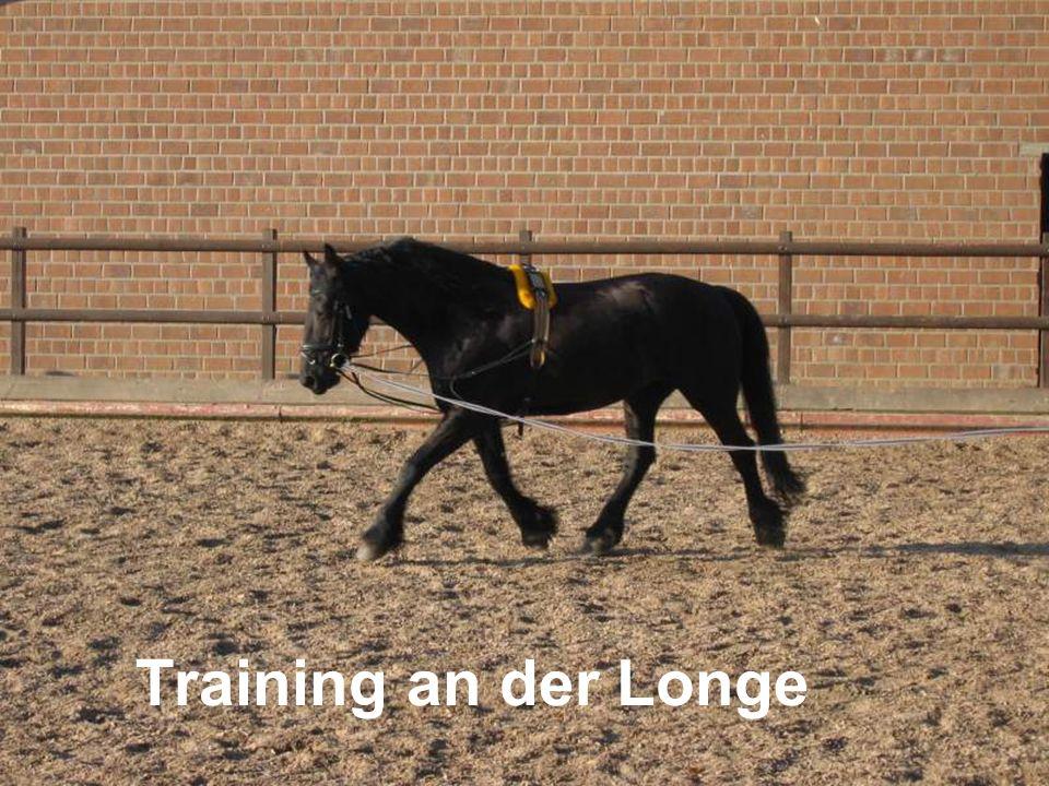 Training an der Longe
