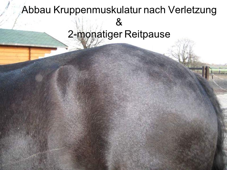 Links: Muskelabbau an der Kruppe nach Verletzung (nach 2-monatiger Trainingspause) Rechts: Besserung nach nur 1 Mon.