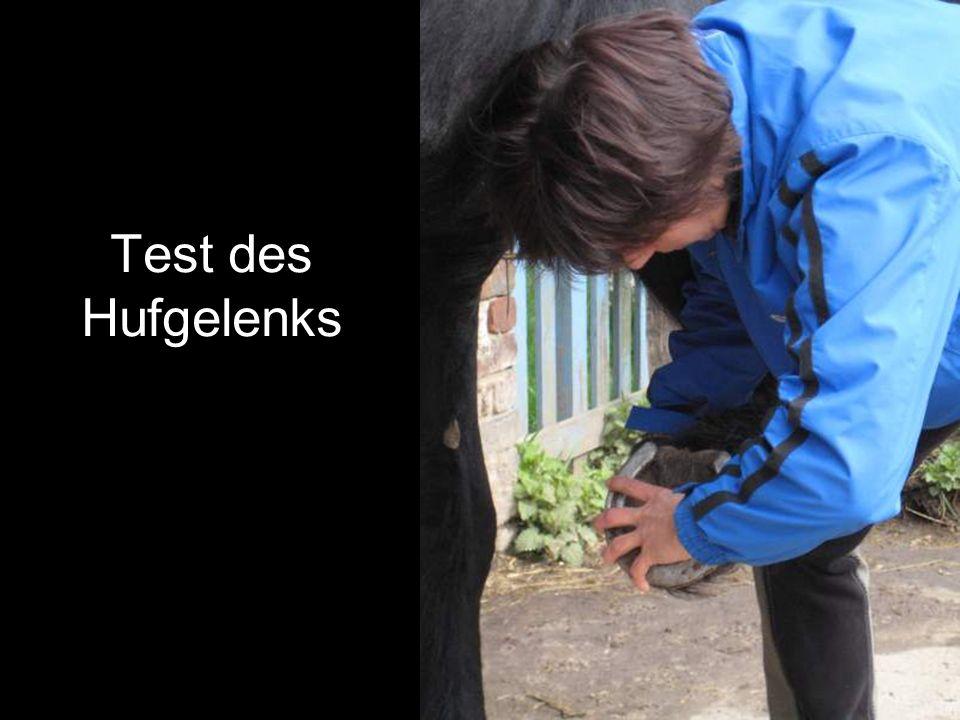 Auch ein Pferd muß mal zum Zahnarzt Pferdedentistin Edith de Munck bei der Arbeit