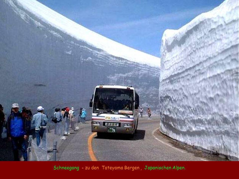 Schneegang - zu den Tateyama Bergen, Japanischen Alpen.